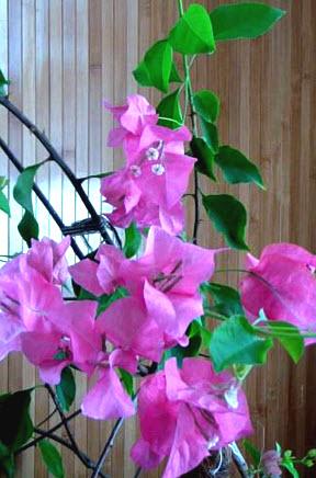Вопросы по уходу за комнатном цветком