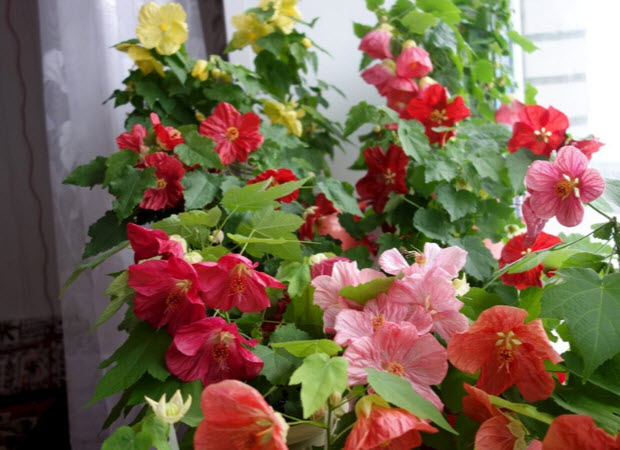 Какова продолжительность жизни растения?