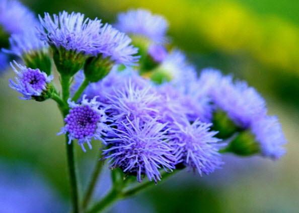 Популярные виды и сорта растения