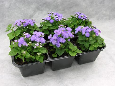 Трудности выращивания растения
