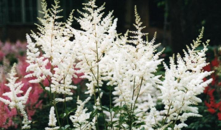 Продолжительность жизни растения
