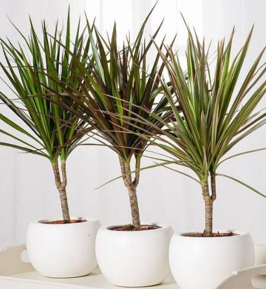 Местоположение и освещение для растения