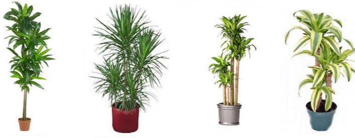 Популярные виды растения