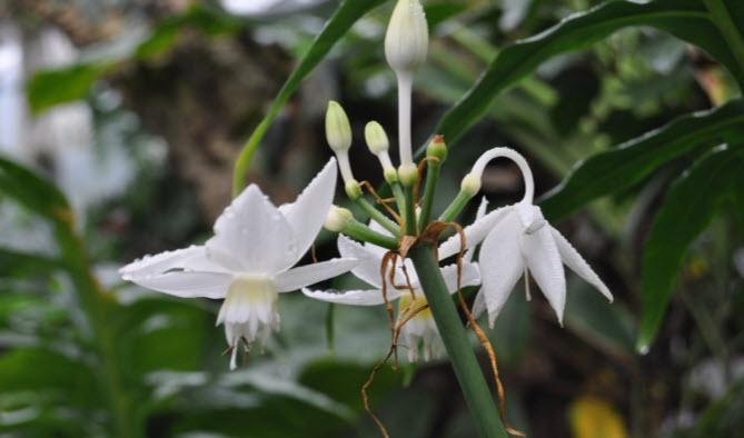 Самые известные виды и сорта растения