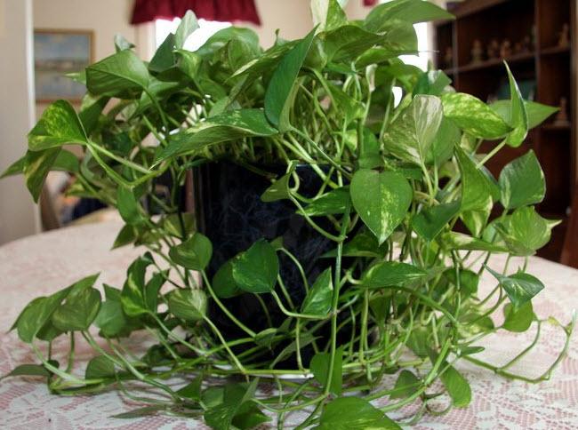 Проблемы болезни вредители растения