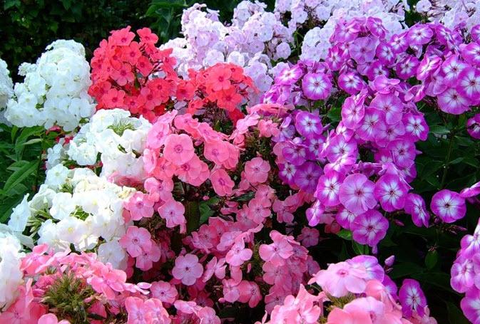 Подкормка и разрыхление цветка
