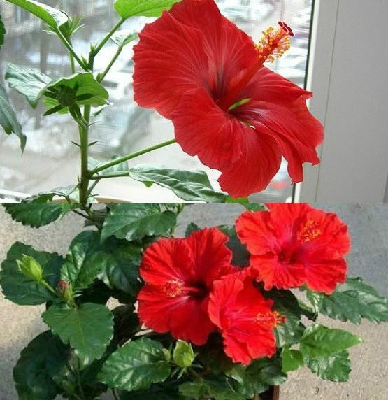 Какова продолжительность жизни растения