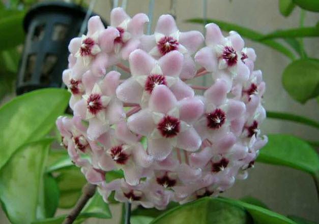 Температурный режим для цветка