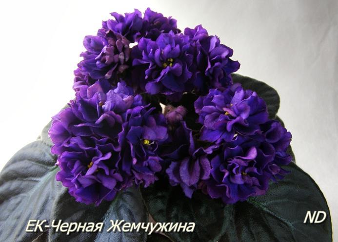http://dimetris.com.ua/forum/files/__1_147.jpg
