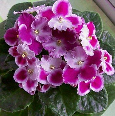 http://www.donnaflora.ru/photo/251/251-1624-152197.jpg