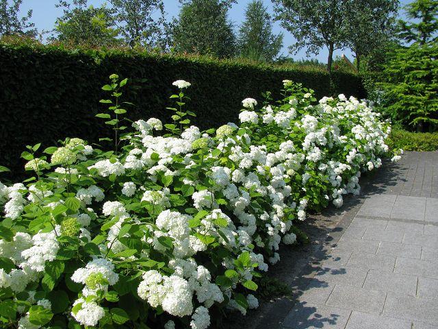 http://www.pflanzenpartner.de/images/product_images/original_images/91_3.JPG