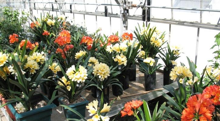 Продолжительность жизни цветка