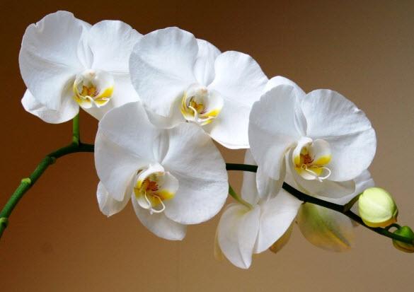 Все способы размножить орхидею дома