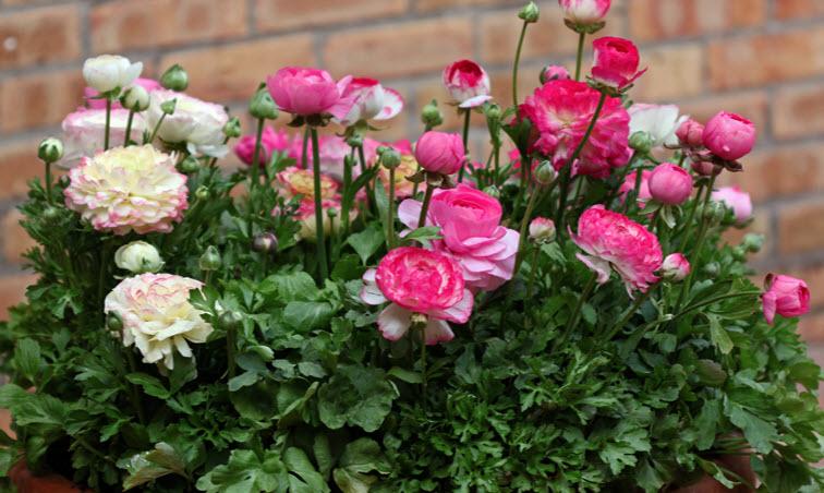 Подкормка и удобрение растения