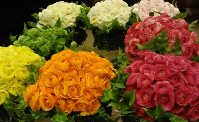Цветение растения