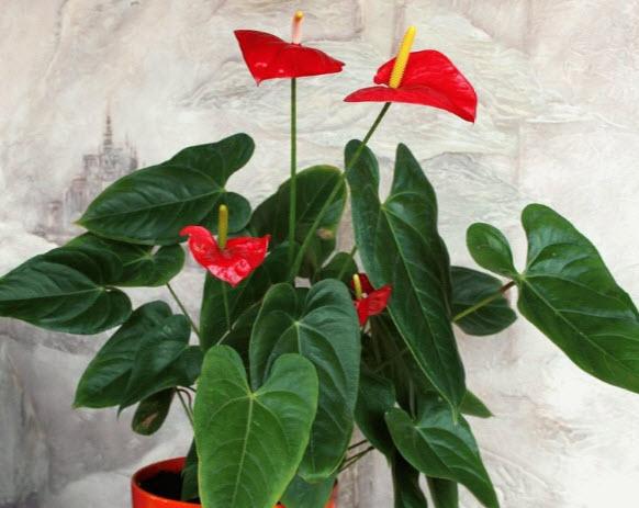 Проблемы, болезни и вредители у цветка