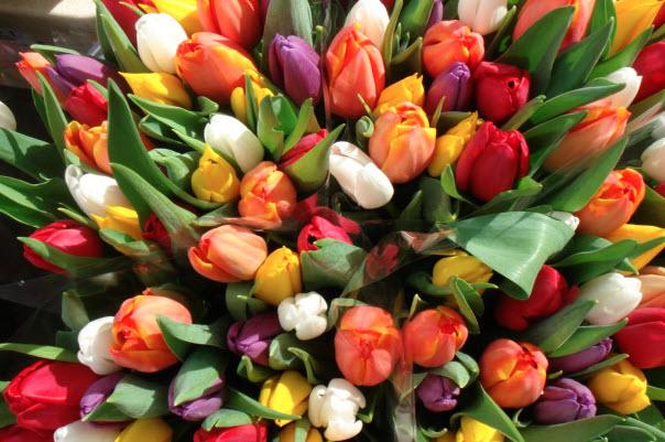 Особенности ухода за тюльпанами