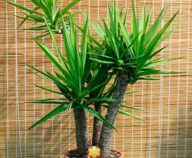Трудности выращивания растения. Полезные советы