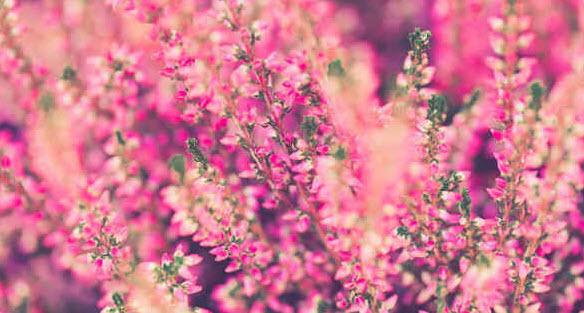 Когда цветет растение?